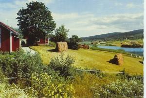 svensk-natur-vykort-ultraforlaget-solna